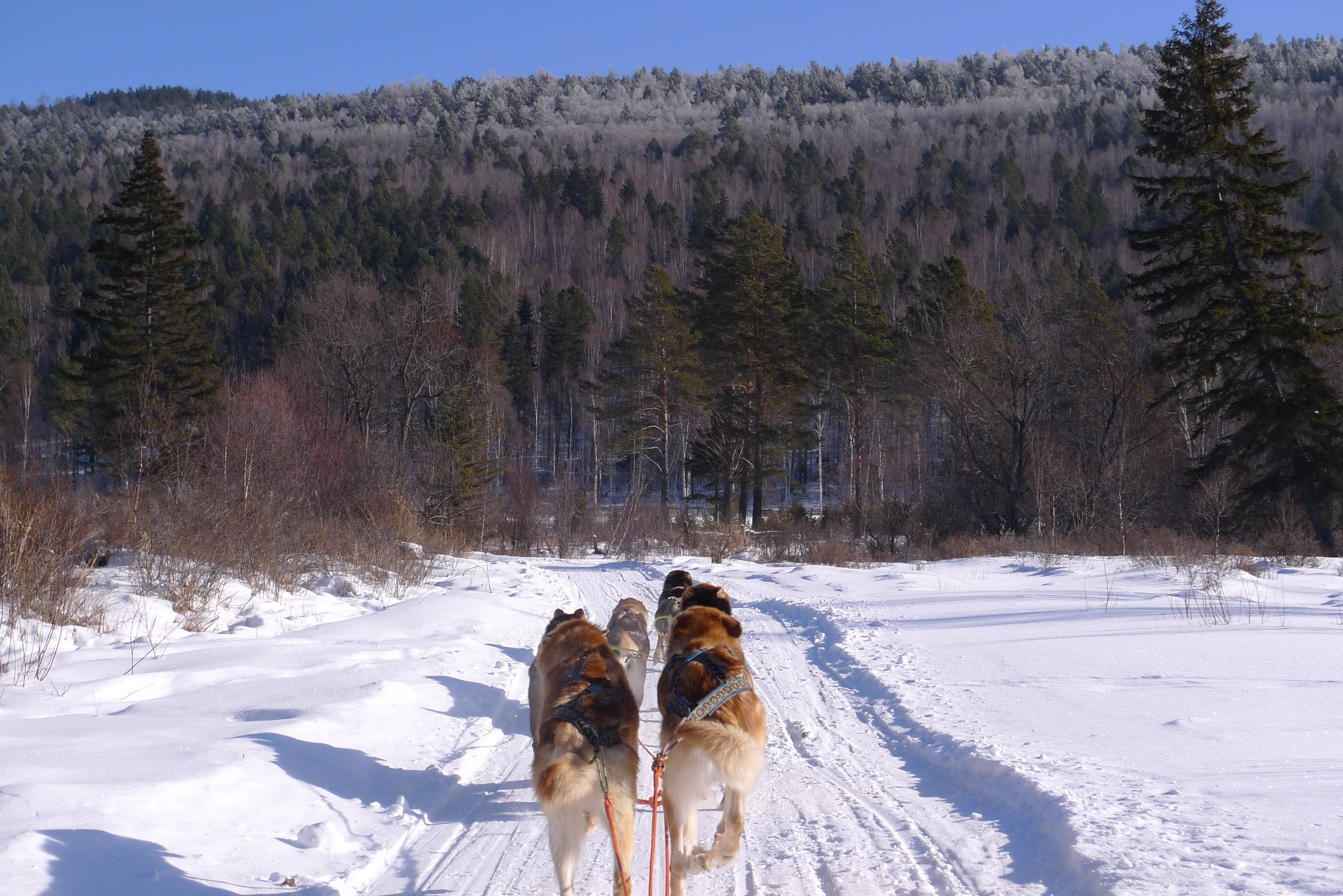 На собачьей упряжке. Отдых на Байкале весной